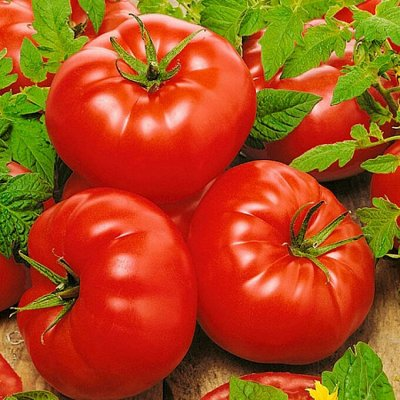Экспресс! Мудрый дачник! Лук - Севок в наличии!✔ — Томаты — Семена овощей
