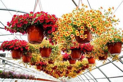 """Наши Евросемена = Ваш успех.  — Премиум """"Дуэты"""" цветы — Семена многолетние"""