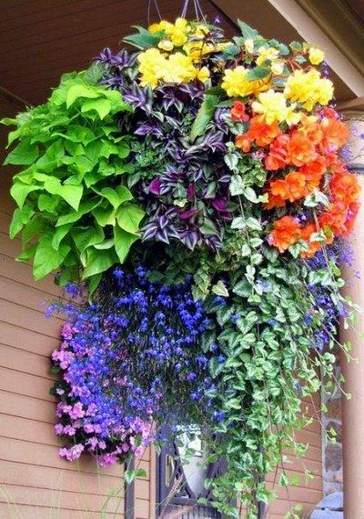 """Наши Евросемена = Ваш успех.  — Премиум """"Трио"""" цветы — Семена цветов"""