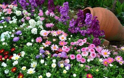 Наши Евросемена = Ваш успех.  — Семена цветы основная коллекция — Семена однолетние