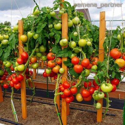 🌱 Семена Партнер. Отличные отзывы садоводов — Томаты от Партнера