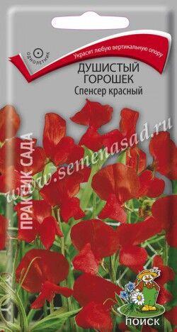 Душистый горошек Спенсер красный ЦП