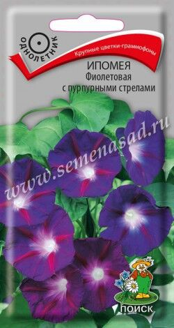 Ипомея Фиолетовая с пурпурными стрелами ЦП