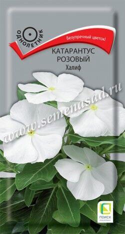 Катарантус розовый Халиф ЦП