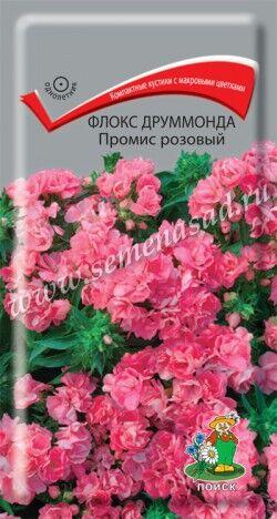Флокс друммонда Промис розовый ЦП