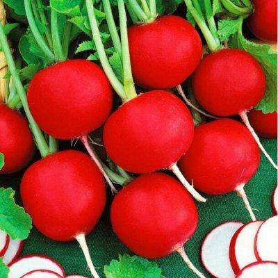 Экспресс! Мудрый дачник! Лук - Севок в наличии!✔ — Редис и прочие корнеплоды — Семена овощей