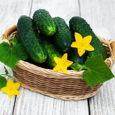 Экспресс! Мудрый дачник! Лук - Севок в наличии!✔ — Огурцы — Семена овощей