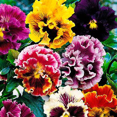 2000 видов семян для посадки! Подкормки, удобрения.     — Цветы двулетние — Семена двулетние
