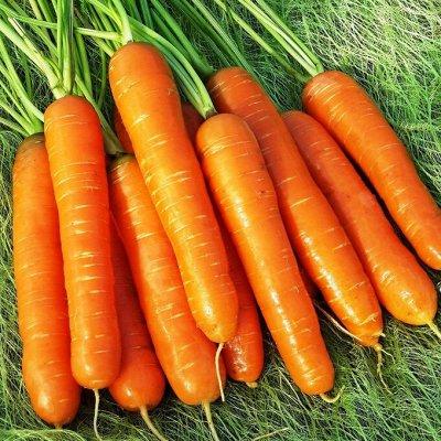 Экспресс! Мудрый дачник! Лук - Севок в наличии!✔ — Морковь — Семена овощей