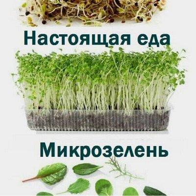 Никольские проростки. Семена для проращивания. Новинки