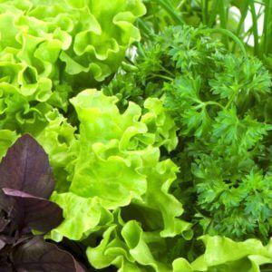 Семена Азии, Мязина, Сибирский сад — все в наличии! — Зелень Сибирский сад — Семена зелени и пряных трав