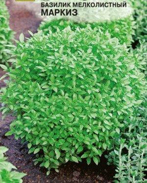 Базилик мелколистный Маркиз зеленый