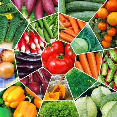 Семена. Большой выбор. — Семена овощных культур — Семена однолетние