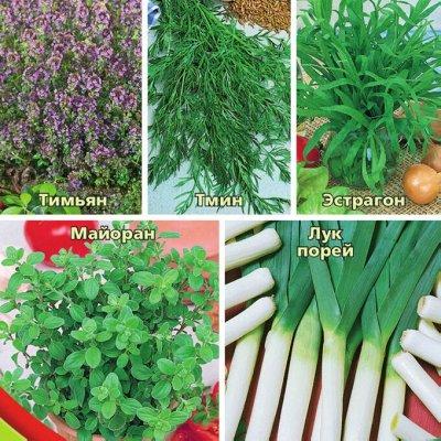 Семена. Большой выбор. — Семена пряных трав — Семена зелени и пряных трав