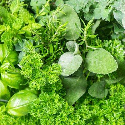 Цветущие саженцы в наличии! Идеальное качество! — Пряные травы — Семена зелени и пряных трав