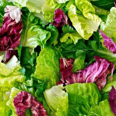 Цветущие саженцы в наличии! Идеальное качество! — Салат — Семена зелени и пряных трав