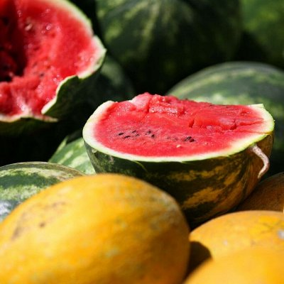 Цветущие саженцы в наличии! Идеальное качество! — Арбузы, дыни, тыквы — Семена овощей