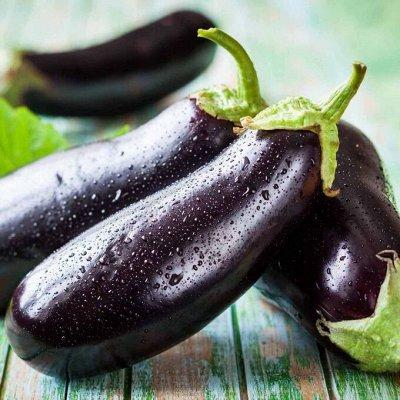 Цветущие саженцы в наличии! Идеальное качество! — Баклажаны, кабачки — Семена овощей