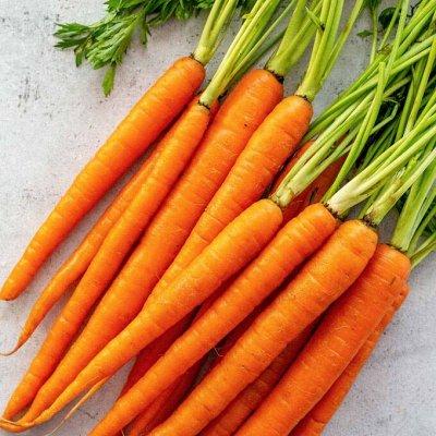Цветущие саженцы в наличии! Идеальное качество! — Морковь — Семена овощей