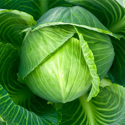 Цветущие саженцы в наличии! Идеальное качество! — Капуста — Семена овощей