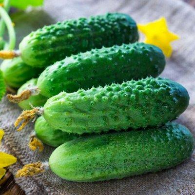 Цветущие саженцы в наличии! Идеальное качество! — Огурцы — Семена овощей