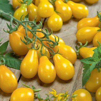 Цветущие саженцы в наличии! Идеальное качество! — Томаты для открытого грунта — Семена овощей