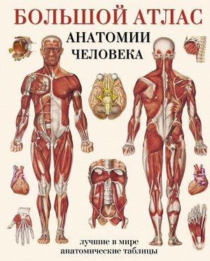 Махиянова Е.Б. Большой атлас анатомии человека