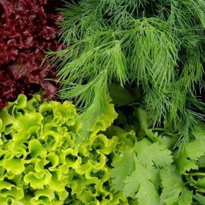 Мудрый дачник🌱 Акция! Лук севок от 69 рублей! Голландия  — Зеленые культуры — Семена зелени и пряных трав