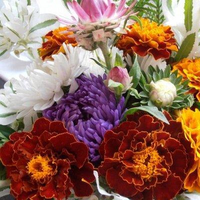 Семена цветов, Химия, Свободное в пути! — Астры, Бархатцы — Семена многолетние