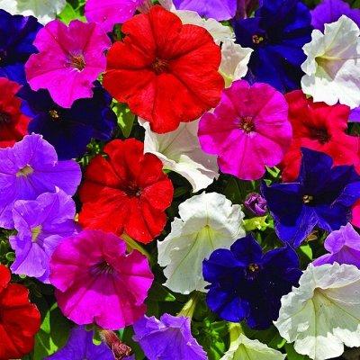Семена цветов, Химия, Свободное в пути! — Петунии — Семена однолетние
