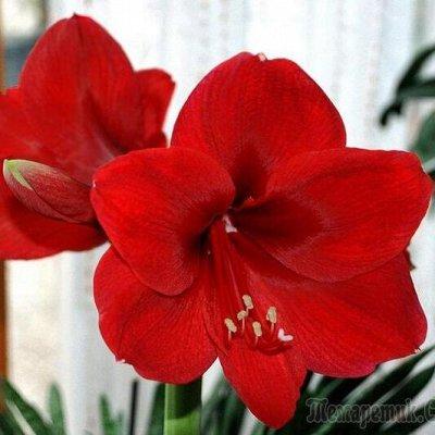 Семена цветов, Химия, Свободное в пути! — Цветы комнатные — Семена многолетние