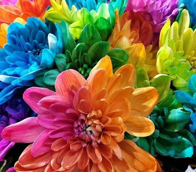 Семена цветов, Химия, Свободное в пути! — Разное — Семена многолетние