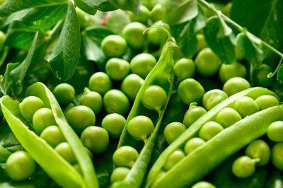 Товары на любой вкус и кошелек Актуальное наличие — ОВОЩИ: вигна, горох, дайкон, кукуруза, мангольд — Семена овощей