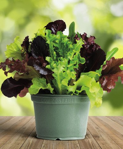(❁´◡`❁) 8 марта: подарки и упаковка подарков — Семена, почвогрунт, удобрения. Сад-огород на балконе! — Семена зелени и пряных трав