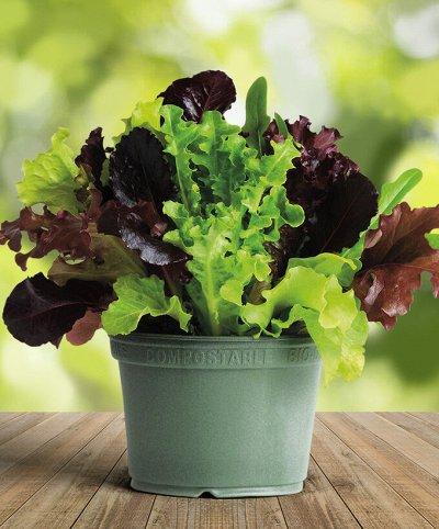 Нескучная канцелярия ʕ • ₒ • ʔ — Семена, почвогрунт, удобрения. Сад-огород на балконе! — Семена зелени и пряных трав