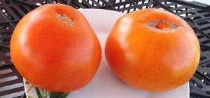 томат Янтарный мед
