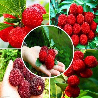 Семена. Большой выбор. — Семена ягод и фруктов — Семена фруктов