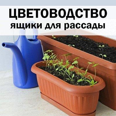 ХЛОПОТУН: чугунная посуда! — Цветоводство — Комнатные растения и уход