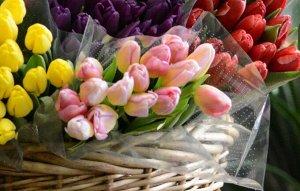 Тюльпаны розовые (15 шт. букет)