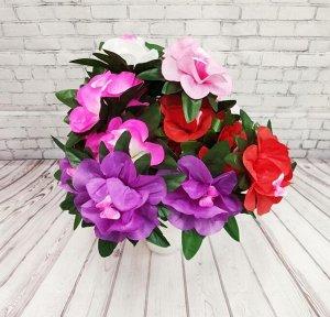 Орхидея, ветка