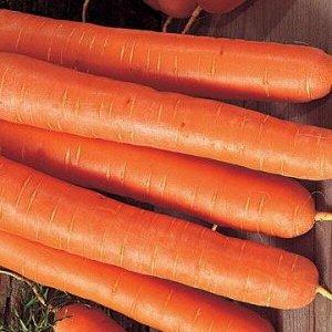 Морковь Форто ЦП