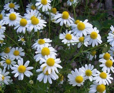 Дачный сезон! НЕ ПРОПУСТИ! Более 2000 видов семян!       — Аптека на грядке НОВОЕ — Семена зелени и пряных трав