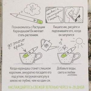 """Растущие карандаши """"Итальянские травы"""" набор 3 шт. черные"""