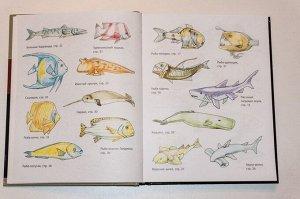 Селиверстова Д. Рисование. Первые шаги (обновленное издание)