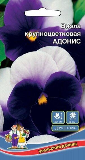 Цветы Виола Адонис (УД) крупноцветковая Новинка!!!