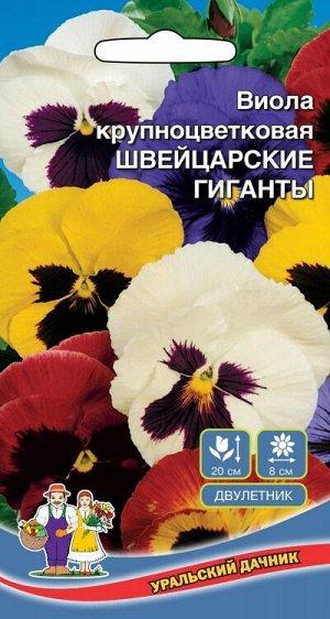 Цветы Виола крупноцветковая - Швейцарские гиганты (УД) Яркая смесь крупноцветковой виолы