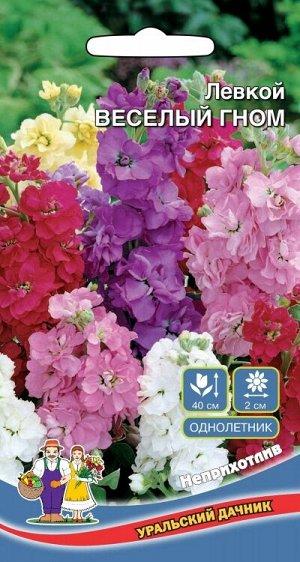 Цветы Левкой Весёлый гном (УД) (соцветия крупные, с густомахровыми цветами, смесь окрасок)