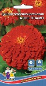 Цветы Цинния Алое Пламя георгиноцветковая (УД) (70 см, до 12 см, полушаровидная)