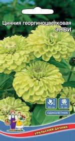 Цветы Цинния Энви (УД) (до 90 см, зелёная, 10-12 см, долго цветет)