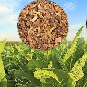 Подготовка к Дачному сезону🏡Семена овощей и цветов от 3руб   — Табак Курительный — Семена зелени и пряных трав